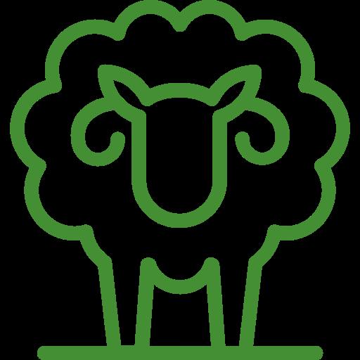 002-sheep